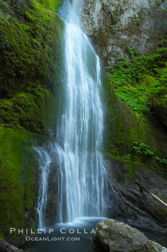 Marymere Falls drops 90 feet through an old-growth forest of Douglas firs, near Lake Crescent. Olympic National Park, Washington, USA, natural history stock photograph, photo id 13767