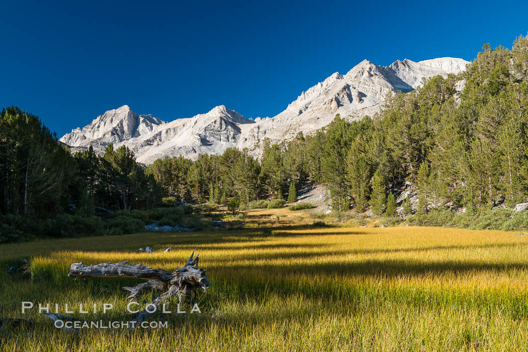 Meadow and Sierra Nevada peak Bear Creek Spire at sunrise, Little Lakes Valley, John Muir Wilderness, Inyo National Forest. Little Lakes Valley, Inyo National Forest, California, USA, natural history stock photograph, photo id 31176