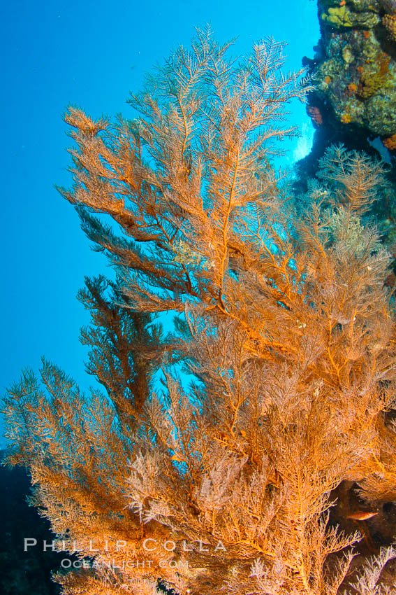 Reef With Gorgonians And Marine Invertebrates Photo, Stock Photo of ...