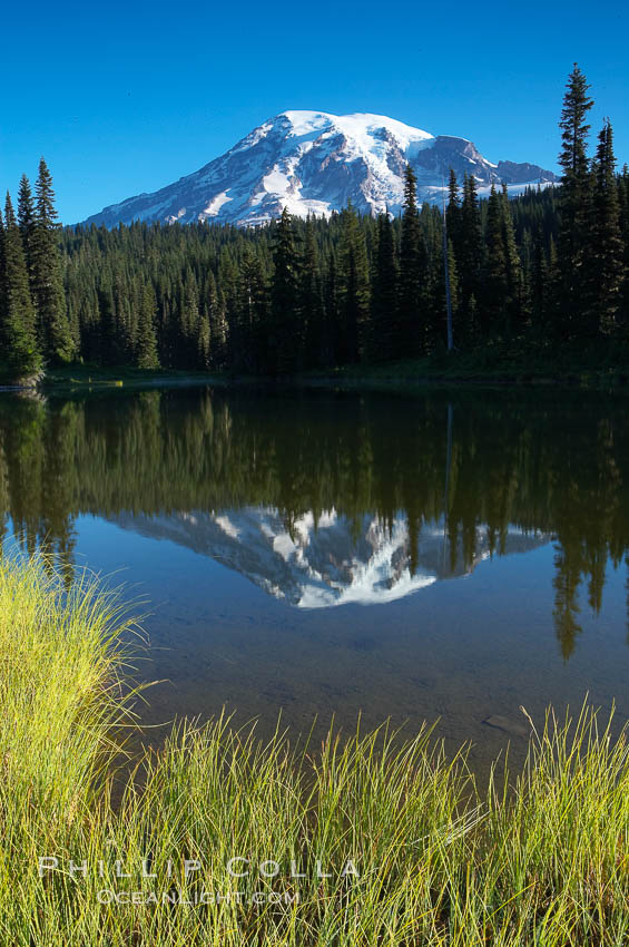 Mount Rainier is reflected in the calm waters of Reflection Lake, early morning. Reflection Lake, Mount Rainier National Park, Washington, USA, natural history stock photograph, photo id 13852