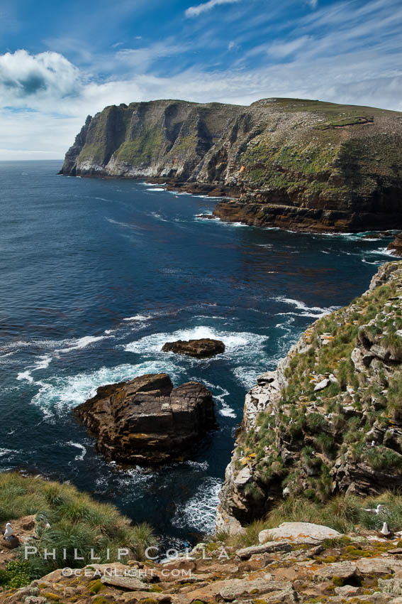 Tall seacliffs overlook the southern Atlantic Ocean, a habitat on which albatross and penguin reside. New Island, Falkland Islands, United Kingdom, natural history stock photograph, photo id 23808