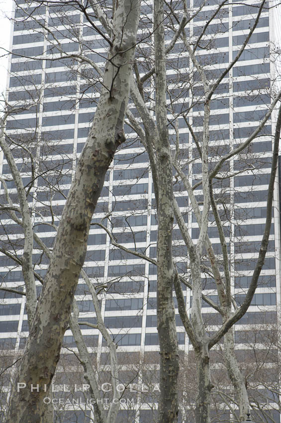 Trees and buildings, winter. Manhattan, New York City, New York, USA, natural history stock photograph, photo id 11161
