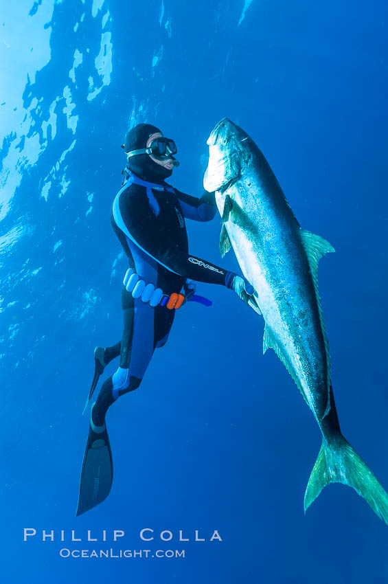 Craig OConnor and his pending spearfishing world record North Pacific yellowtail (77.4 pounds), taken on a breathold dive with a band-power speargun near Abalone Point.  Guadalupe Island is home to enormous yellowtail.  The three most recent spearfishing world records for Northern yellowtail have been taken at Guadalupe. July 2004. Guadalupe Island (Isla Guadalupe), Baja California, Mexico, Seriola lalandi, natural history stock photograph, photo id 09590