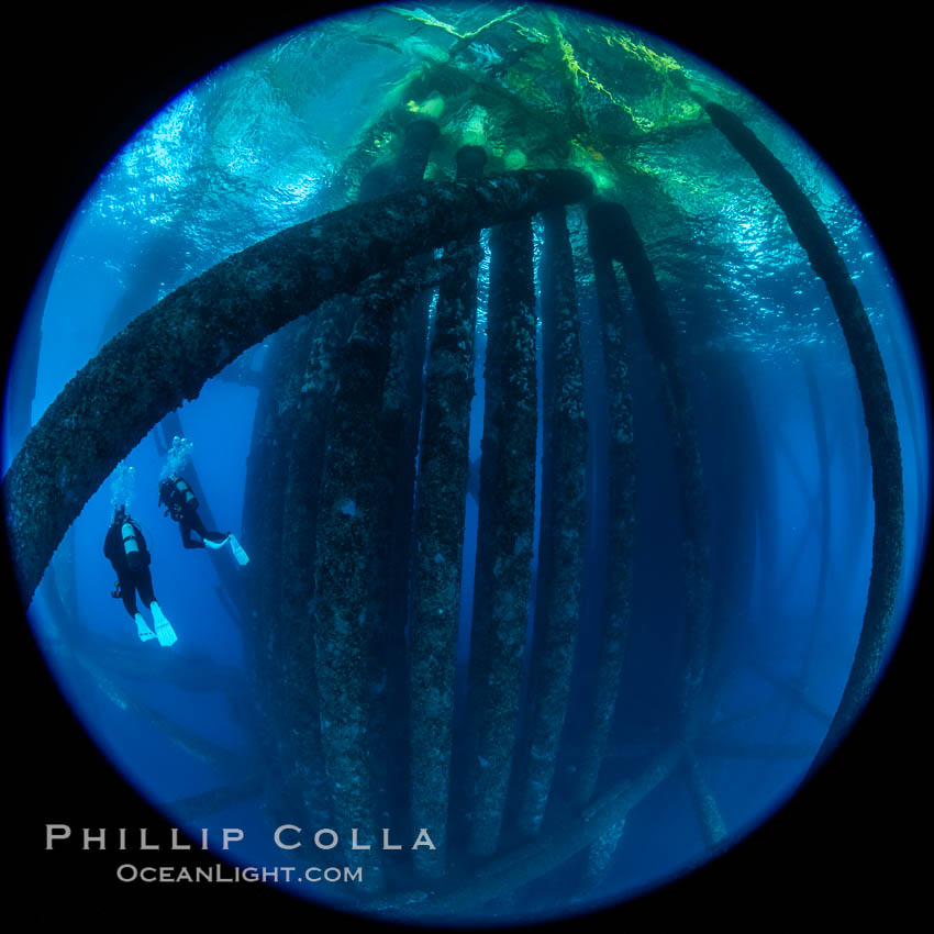 Oil Rig Eureka, Underwater Structure. Long Beach, California, USA, natural history stock photograph, photo id 34661