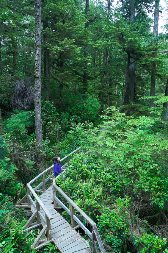 Hiker admires the temperate rainforest along the Rainforest Trail in Pacific Rim NP, one of the best places along the Pacific Coast to experience an old-growth rain forest, complete with western hemlock, red cedar and amabilis fir trees. Moss gardens hang from tree crevices, forming a base for many ferns and conifer seedlings. Rainforest Trail, Pacific Rim National Park, British Columbia, Canada, natural history stock photograph, photo id 21053