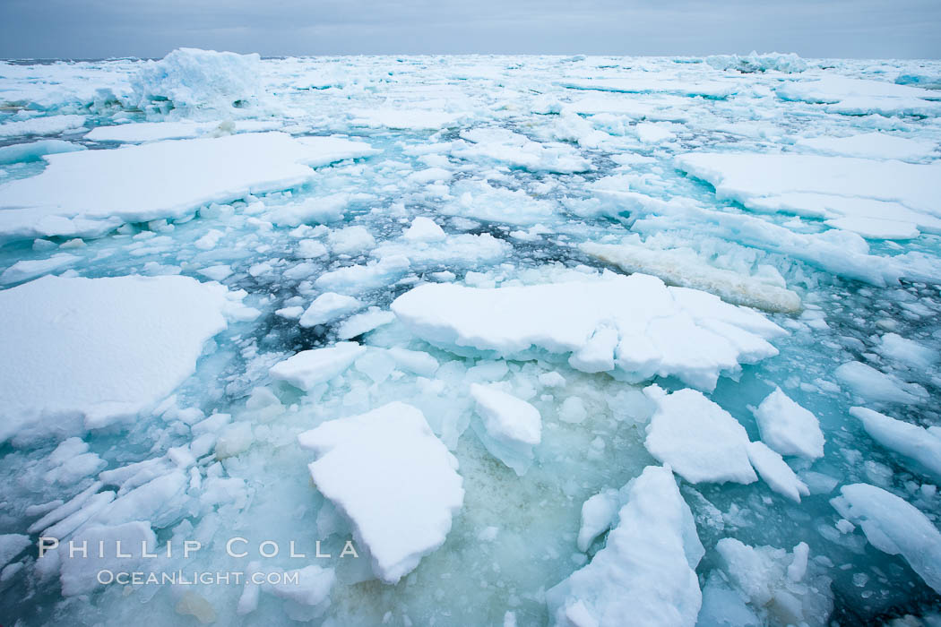 Pack ice and brash ice fills the Weddell Sea, near the Antarctic Peninsula.  This pack ice is a combination of broken pieces of icebergs, sea ice that has formed on the ocean. Southern Ocean, natural history stock photograph, photo id 24790