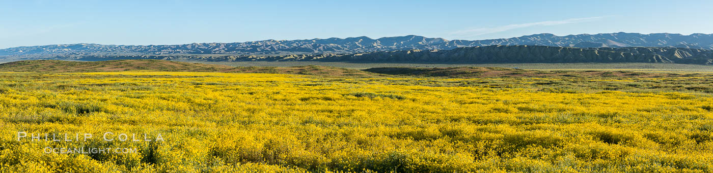 A Panorama of Wildflowers blooms across Carrizo Plains National Monument, during the 2017 Superbloom. Carrizo Plain National Monument, California, USA, natural history stock photograph, photo id 33228