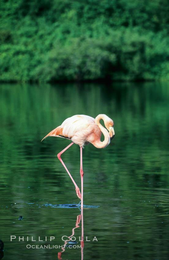 Pink Flamingo Pencils Flamingo Costume Male Exotic Dancers
