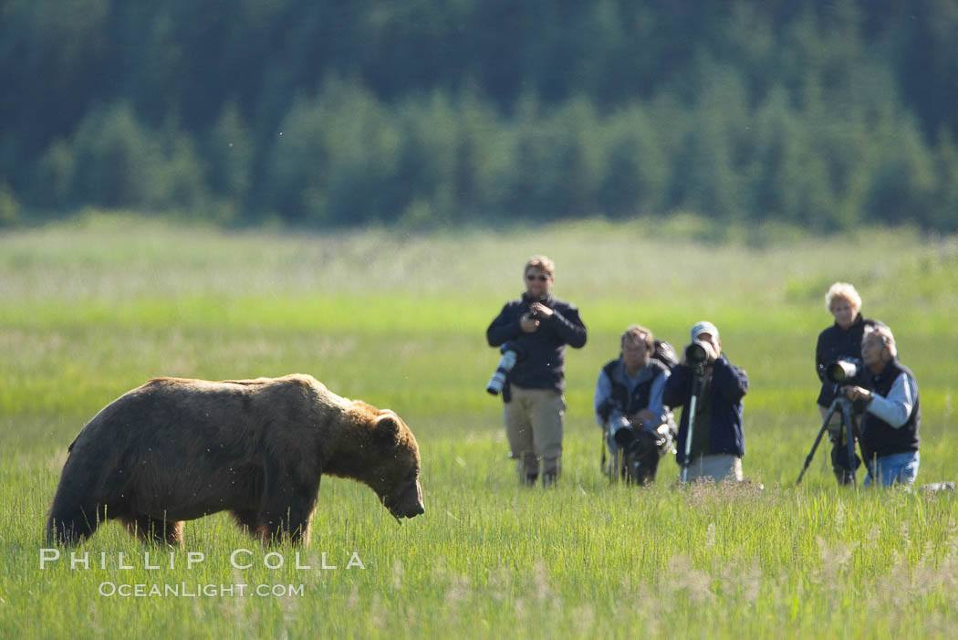 Photographers and brown bear, Lake Clark National Park, Alaska