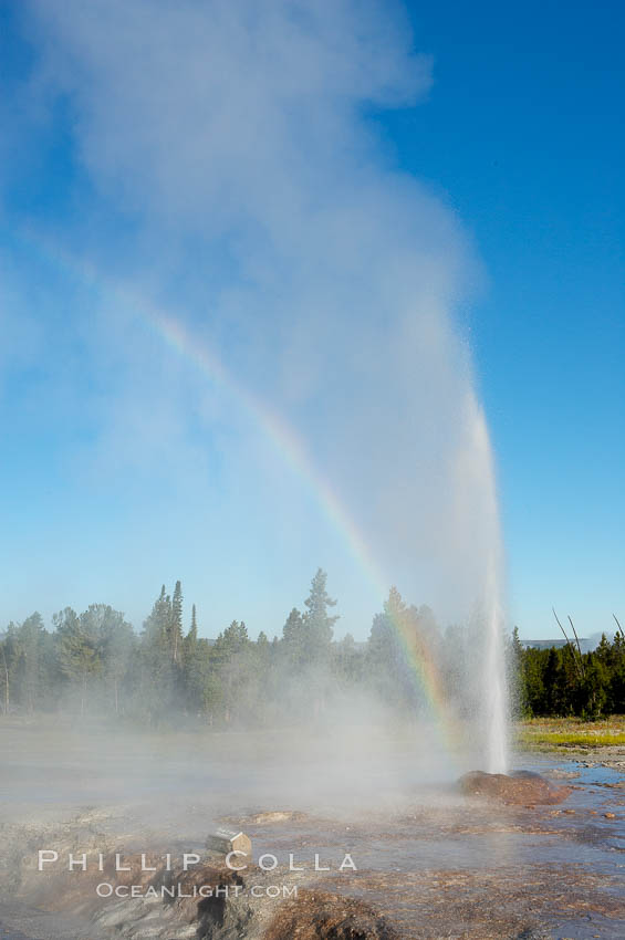 A rainbow appears in the spray of Pink Cone Geyser.  Pink Cone Geyser reaches 30 feet in height, and has highly variable interval and duration.  It is a cone-type geyser and its cone has a pinkish tint due to manganese oxide in it.  Firehole Lake Drive, Lower Geyser Basin, Yellowstone Park. Lower Geyser Basin, Yellowstone National Park, Wyoming, USA, natural history stock photograph, photo id 13553