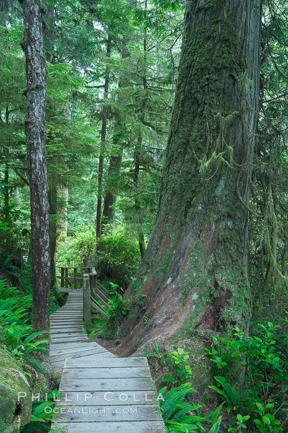 壁纸 风景 森林 桌面 525_789 竖版 竖屏 手机