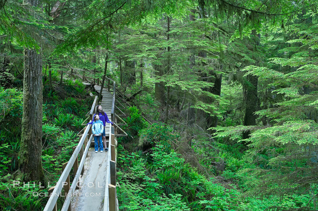 Hikers admire the temperate rainforest along the Rainforest Trail in Pacific Rim NP, one of the best places along the Pacific Coast to experience an old-growth rain forest, complete with western hemlock, red cedar and amabilis fir trees. Moss gardens hang from tree crevices, forming a base for many ferns and conifer seedlings.,  Copyright Phillip Colla, image #21056, all rights reserved worldwide.