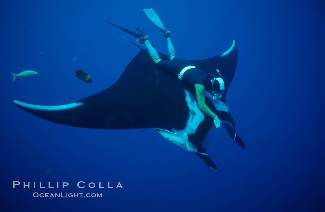 Manta ray and freediver. San Benedicto Island (Islas Revillagigedos), Baja California, Mexico, Manta birostris, natural history stock photograph, photo id 02464