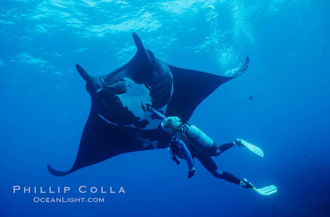 Manta ray and scuba diver. San Benedicto Island (Islas Revillagigedos), Baja California, Mexico, Manta birostris, natural history stock photograph, photo id 02461