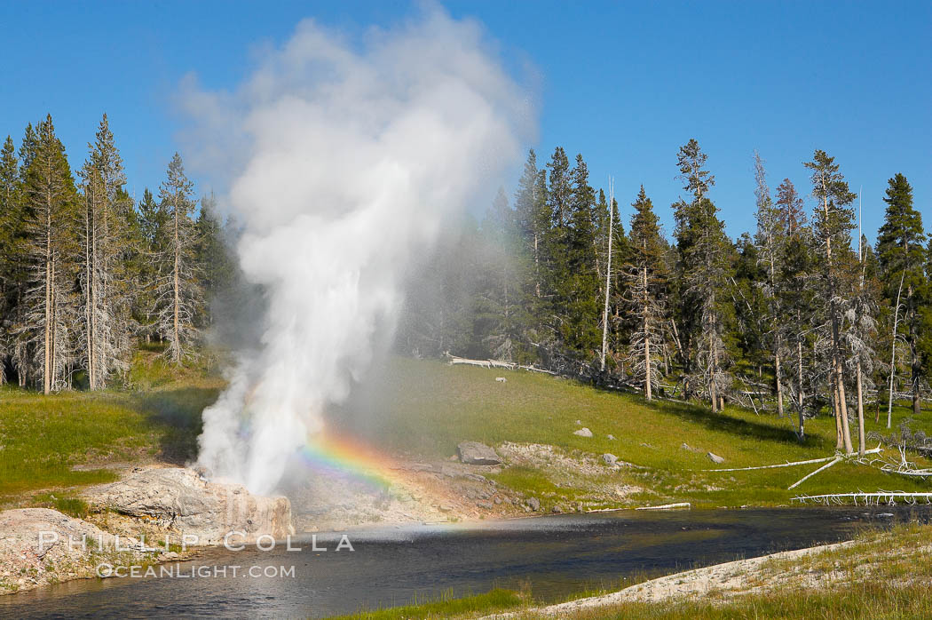 A rainbow appears in the spray of Riverside Geyser as it erupts over the Firehole River.  Riverside is a very predictable geyser.  Its eruptions last 30 minutes, reach heights of 75 feet and are usually spaced about 6 hours apart.  Upper Geyser Basin. Upper Geyser Basin, Yellowstone National Park, Wyoming, USA, natural history stock photograph, photo id 13368