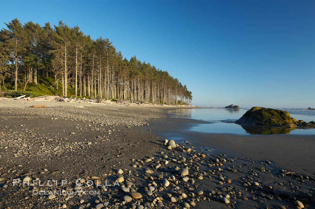 Ruby Beach, sunset lights up the trees along the beach. Olympic National Park, Washington, USA, natural history stock photograph, photo id 13809