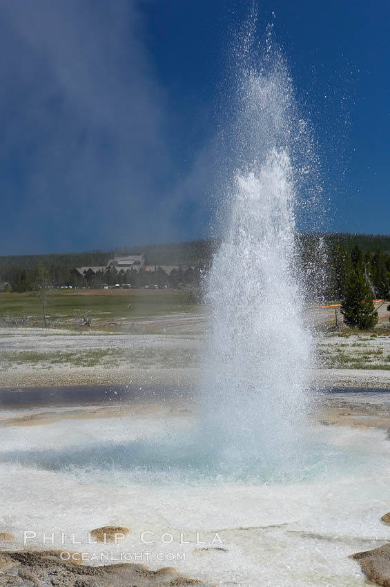 Sawmill Geyser erupting.  Sawmill Geyser is a fountain-type geyser and, in some circumstances, can be erupting about one-third of the time up to heights of 35 feet.  Upper Geyser Basin. Yellowstone National Park, Wyoming, USA, natural history stock photograph, photo id 13387