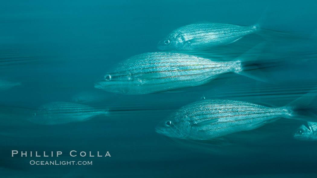 motion blur sea - photo #33