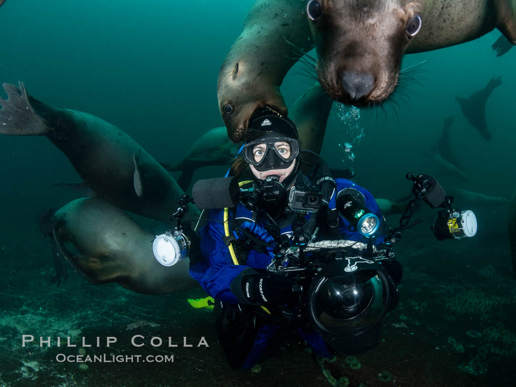 SCUBA Diver and Steller Sea Lions Underwater,  underwater photographer, Hornby Island, British Columbia, Canada. Norris Rocks, Eumetopias jubatus, natural history stock photograph, photo id 36121