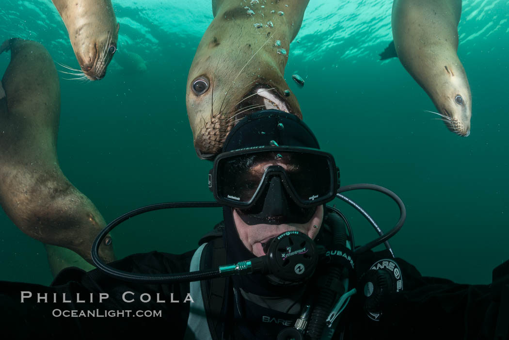 Selfie with Steller sea lion underwater, Norris Rocks, Hornby Island, British Columbia, Canada. Hornby Island, British Columbia, Canada, Eumetopias jubatus, natural history stock photograph, photo id 32685