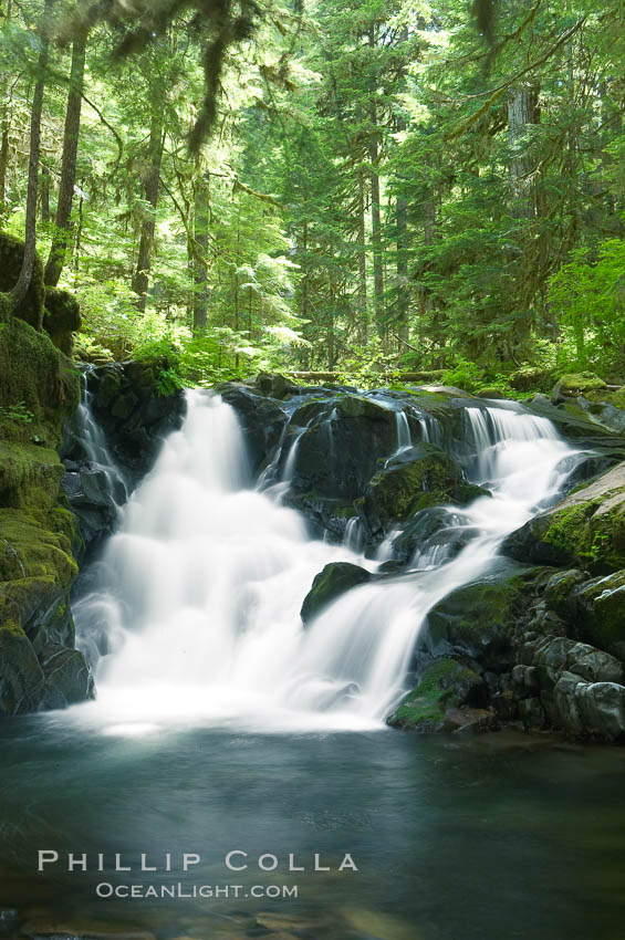 A small waterfall tumbles through old growth forest of douglas firs and hemlocks.  Sol Duc Springs. Sol Duc Springs, Olympic National Park, Washington, USA, natural history stock photograph, photo id 13760