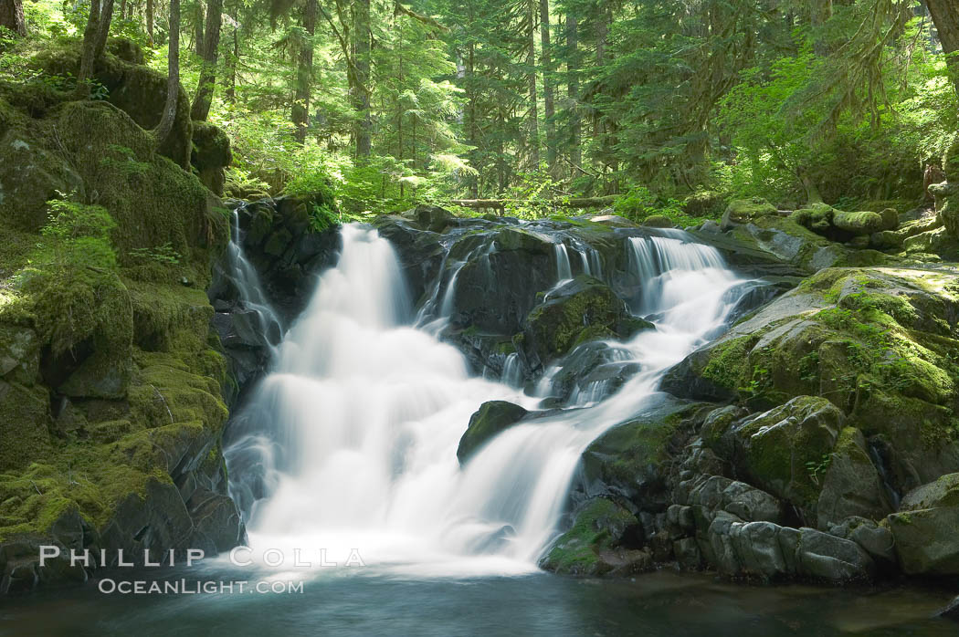 A small waterfall tumbles through old growth forest of douglas firs and hemlocks.  Sol Duc Springs. Olympic National Park, Washington, USA, natural history stock photograph, photo id 13759