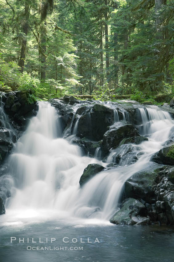 A small waterfall tumbles through old growth forest of douglas firs and hemlocks.  Sol Duc Springs. Sol Duc Springs, Olympic National Park, Washington, USA, natural history stock photograph, photo id 13761