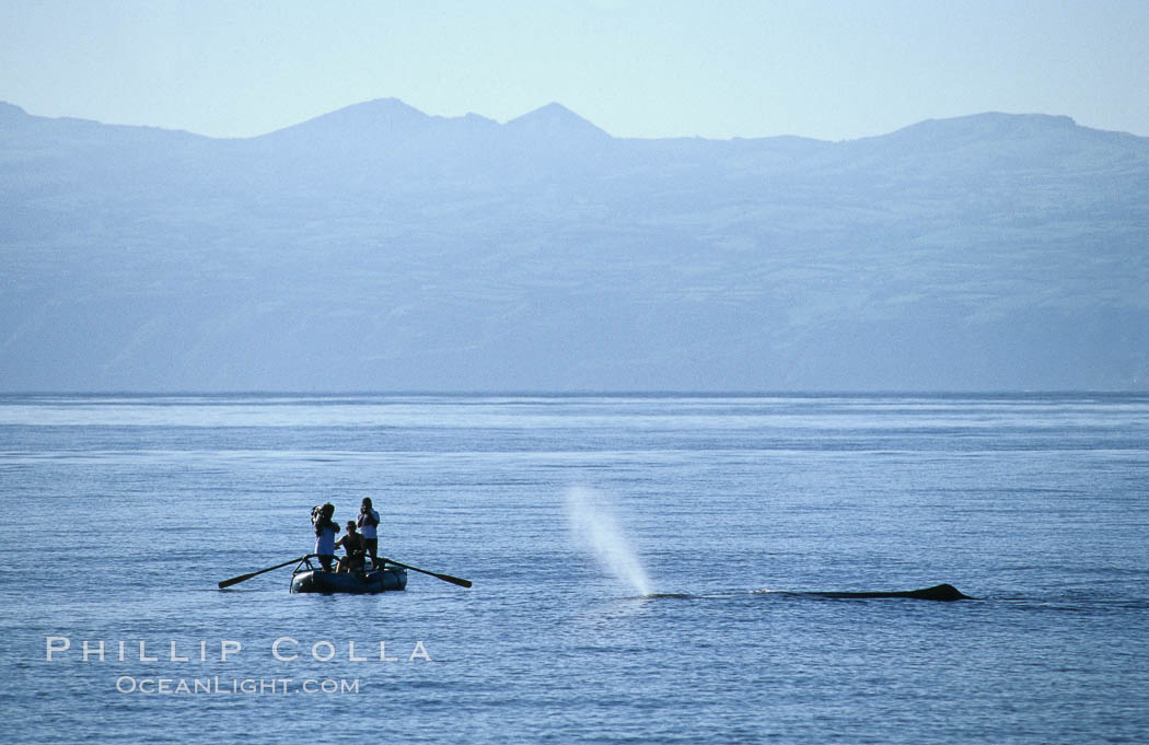 Sperm whale blows in front of Tokyo Broadcasting System film crew. Sao Miguel Island, Azores, Portugal, Physeter macrocephalus, natural history stock photograph, photo id 02082
