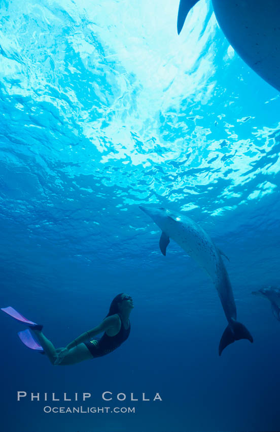 Atlantic spotted dolphin, Olympic swimmer Mikako Kotani. Bahamas, Stenella frontalis, natural history stock photograph, photo id 00670