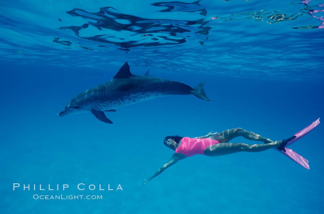 Atlantic spotted dolphin, Olympic swimmer Mikako Kotani. Bahamas, Stenella frontalis, natural history stock photograph, photo id 00647