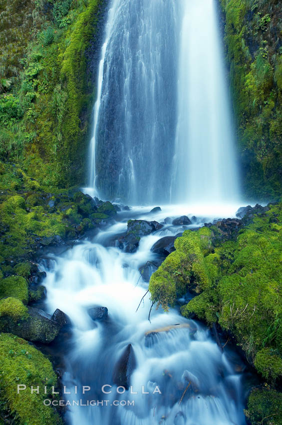 Wahkeena Falls drops 249 feet in several sections through a lush green temperate rainforest. Columbia River Gorge National Scenic Area, Oregon, USA, natural history stock photograph, photo id 19324