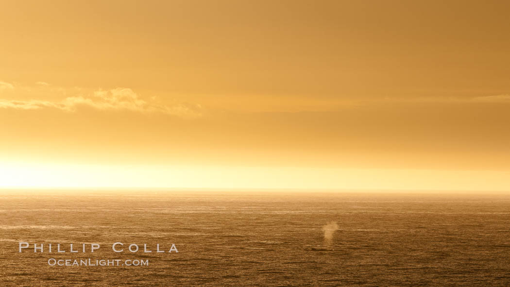 Whale blow at sunrise, near Deception Island. Deception Island, Antarctic Peninsula, Antarctica, natural history stock photograph, photo id 25472