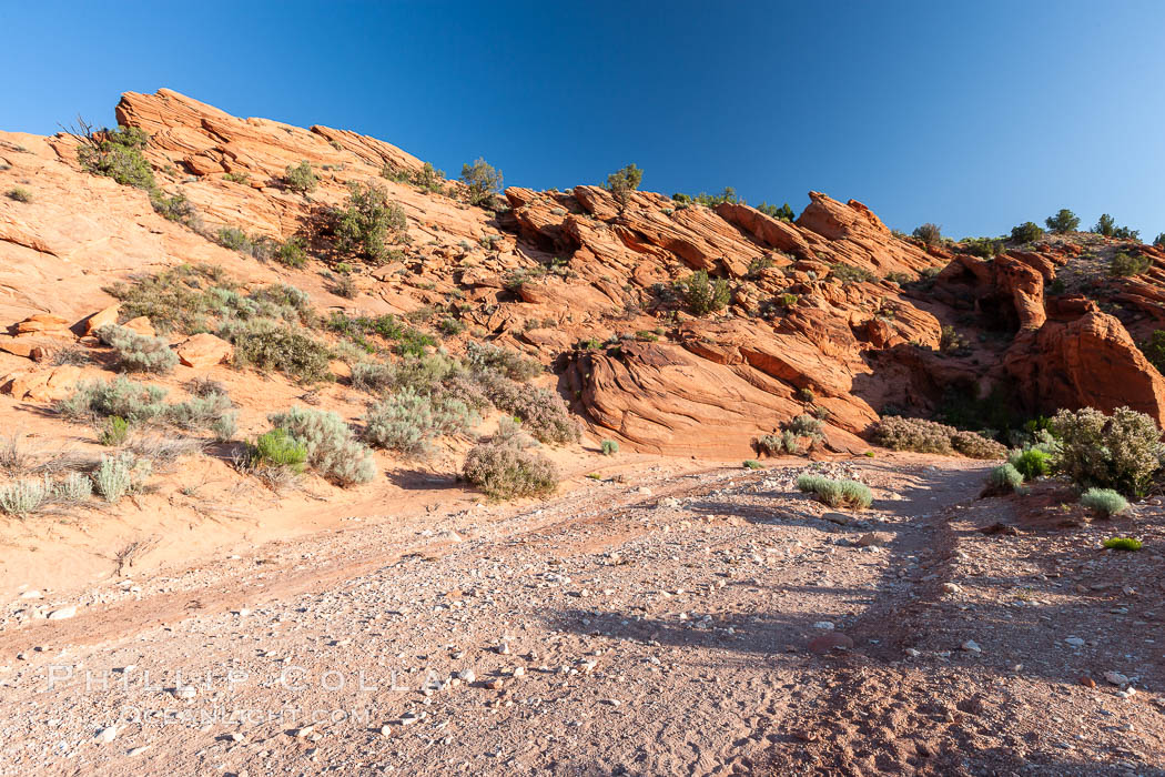 Wire Pass trail.  The Wire Pass trail runs along a river wash through sandstone bluffs and scattered trees and scrub brush, Paria Canyon-Vermilion Cliffs Wilderness, Arizona
