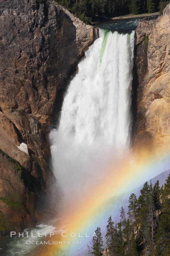 A rainbow appears in the mist of the Lower Falls of the Yellowstone River.  At 308 feet, the Lower Falls of the Yellowstone River is the tallest fall in the park.  This view is from Lookout Point on the North side of the Grand Canyon of the Yellowstone.  When conditions are perfect in midsummer, a midmorning rainbow briefly appears in the falls.,  Copyright Phillip Colla, image #13327, all rights reserved worldwide.