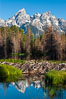 A beaver dam floods a sidewater of the Snake River, creating a pond near Schwabacher Landing. Grand Teton National Park, Wyoming, USA. Image #07341