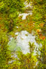 Moss and rocks, Bass Lake, western Sierra. California, USA. Image #12697