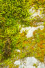 Moss and rocks, Bass Lake, western Sierra. California, USA. Image #12698