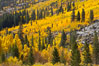 Aspen trees turn yellow and orange in early October, South Fork of Bishop Creek Canyon. Bishop Creek Canyon, Sierra Nevada Mountains, California, USA. Image #17532