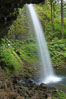 Ponytail Falls, where Horsetail Creeks drops 100 feet over an overhang below which hikers can walk. Columbia River Gorge National Scenic Area, Oregon, USA. Image #19337