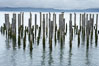 Derelict pilings, remnants of long abandoned piers. Columbia River, Astoria, Oregon, USA. Image #19384