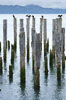 Derelict pilings, remnants of long abandoned piers. Columbia River, Astoria, Oregon, USA. Image #19387