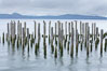 Derelict pilings, remnants of long abandoned piers. Columbia River, Astoria, Oregon, USA. Image #19388