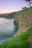 La Jolla Cliffs overlook the ocean with thousands of cormorants, pelicans and gulls resting and preening on the sandstone cliffs.  Sunrise with pink skies. La Jolla, California, USA. Image #20253