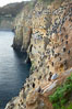 La Jolla Cliffs overlook the ocean with thousands of cormorants, pelicans and gulls resting and preening on the sandstone cliffs. California, USA. Image #20256
