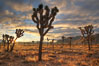Sunrise in Joshua Tree National Park. California, USA. Image #22100