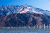 Wind turbines rise above the flat floor of the San Gorgonio Pass near Palm Springs, with snow covered Mount San Jacinto in the background, provide electricity to Palm Springs and the Coachella Valley. California, USA. Image #22243