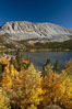 Mount Morgan and Rock Creek Lake with changing aspens, fall colors, autumn. Rock Creek Canyon, Sierra Nevada Mountains, California, USA. Image #23353