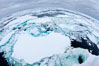 Pack ice and brash ice fills the Weddell Sea, near the Antarctic Peninsula.  This pack ice is a combination of broken pieces of icebergs, sea ice that has formed on the ocean. Weddell Sea, Southern Ocean. Image #24838