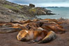 Southern elephant seals, gathered in a small colony near the ocean, a pinniped wallow. Livingston Island, Antarctic Peninsula, Antarctica. Image #25916