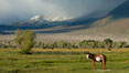Horse and meadow near Round Valley, with Sierra Nevada mountains in the distance. Bishop, California, USA. Image #26884